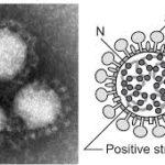 2020/2/25コロナウイルス